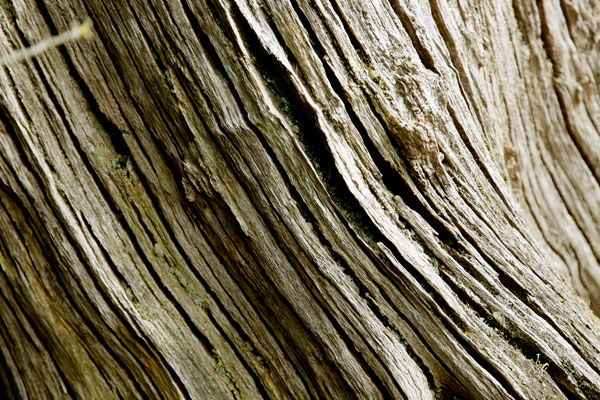 tree stump patterns - photo