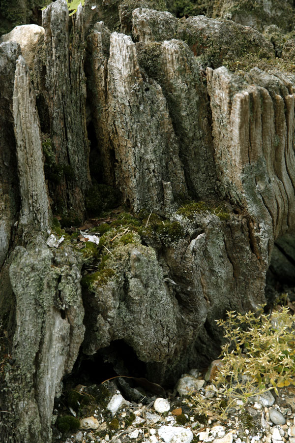 tree-stump-patterns2