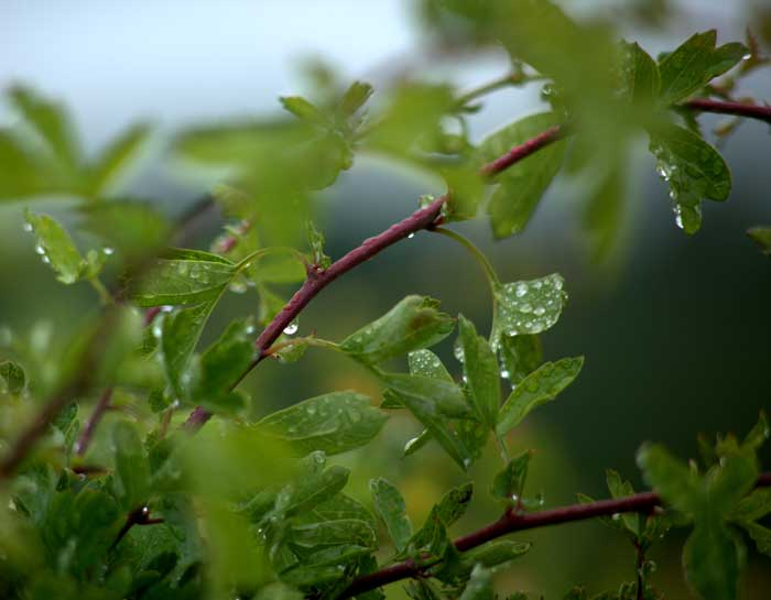 Water droplets on a dreary day - photo